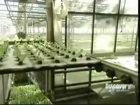Sielsie are aquaponic farms profitable for Hydroponic raft system design
