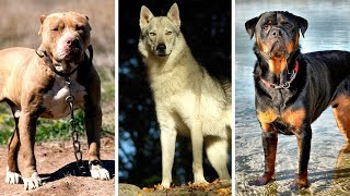 7 Most Banned and Dangerous Dogs Around In the World