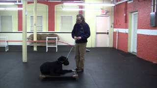 How To Dog Training Remote Collar Place Command DIY