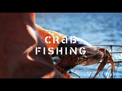 Crab Trap Fishing: Discover the story of how crab is harvested