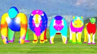 Multi Color Gorilla Animals Finger Family Song For Kids,Lion,Tiger,bear,cheetha,children,NASHTOON Tv