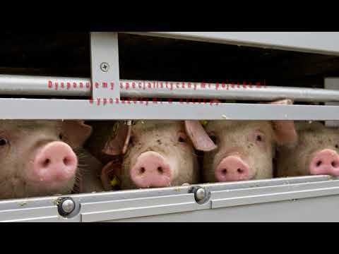 Import Zwierząt Handel Zwierzętami Rzeźnymi Osowa Sień Handel Zwierzętami Jarosław Tarka