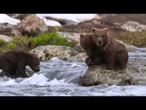 О медведях и не только... | Новости сегодня | Происшествия | Масс Медиа