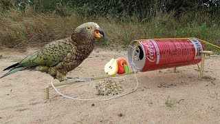 Easy parrot Trap - Simple DIY Creative parrot Trap make from Coca That Work 100% By Smart Boy