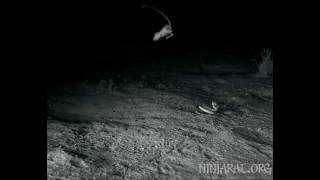 Kangaroo rat mid-air maneuver via tail rotation