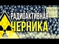 ☢  Опасная Радиоактивная Черника зараженная изотопами Цезия 137