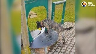 Very Smart Doggo Knows How To Entertain Himself | The Dodo