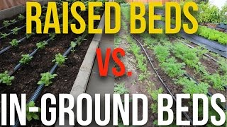 IN PRACTICE - Raised Beds vs In-Ground Beds