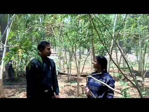 Intercrop in coconut garden Kannada BAIF Karnataka