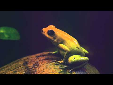 Echoes of Nature - Water Frogs