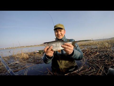 рыбалка в пруду на плотву