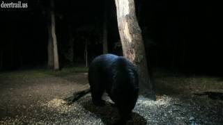 Another Bear Visit 6-22-17