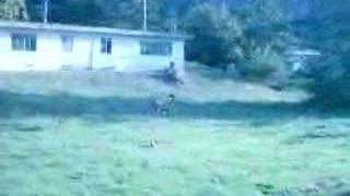 Watch Decemberists Like A Lion video