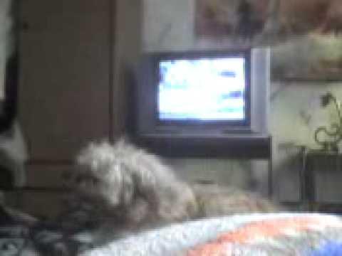 Mascota graciosa Titi y el despertador 2