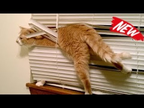 CATS will make you LAUGH YOUR HEAD OFF - Funny CAT compilation - TRY NOT TO LAUGH or GRIN