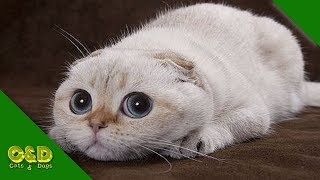 Too Cute CATS will make you LAUGH YOUR HEAD OFF - Funny CAT compilation - So Much Cuteness