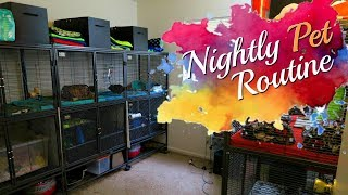 Nightly Routine! (w/ Hedgehogs, Tenrec, Guinea Pigs & Hamsters)