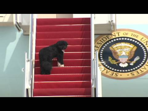 CNN: Bo goes on birthday trip with Obama