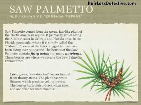 Saw Palmetto Natural Treatment To Help Stop Hair Loss And