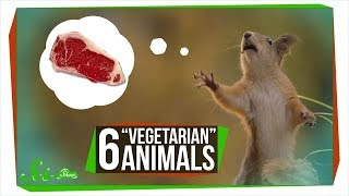 """6 """"Vegetarian"""" Animals that Will Give You Nightmares"""