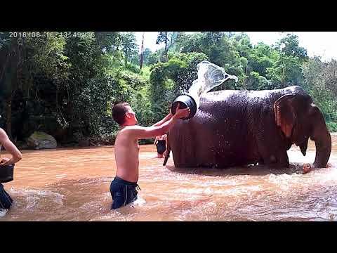 Fidel mullant l'elefant