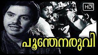 Poonthenaruvi 1974 Malayalam Full Movie HD  || New Movie Upload Online || Malayalam Movie 2013