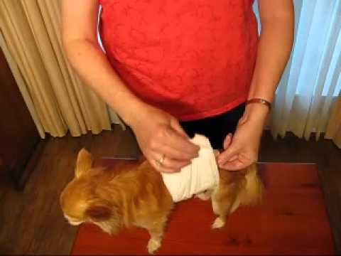 How To---Disposables for Male Dog Urination Problems.MP4