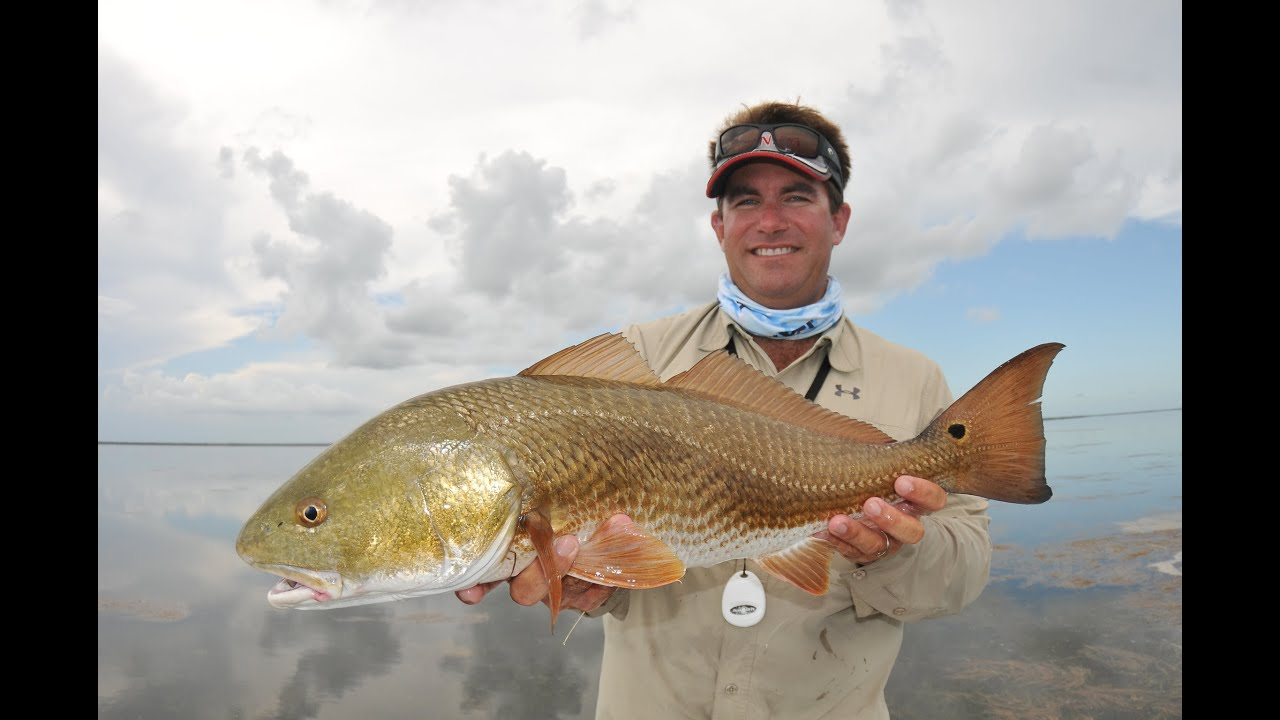 Saltwater Experience Shark Snook And Redfish In The