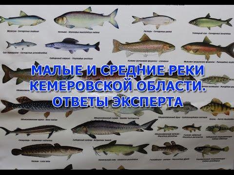 рыбалка на хариуса на реке томь