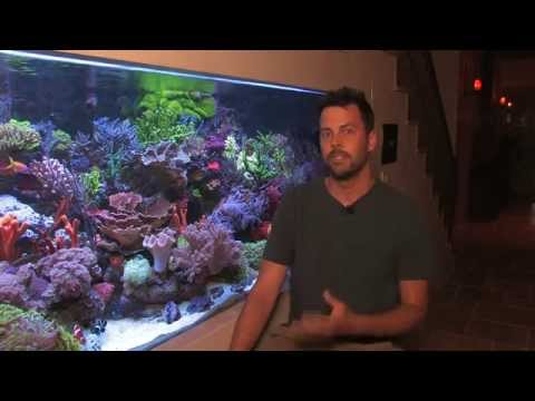 Vivid 400 Gallon Reef Aquarium