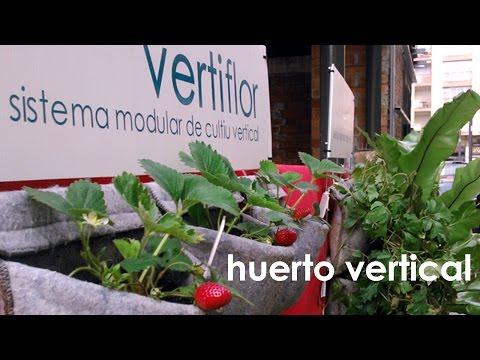 huerto urbano en casa de fresas, verduras y aromaticas