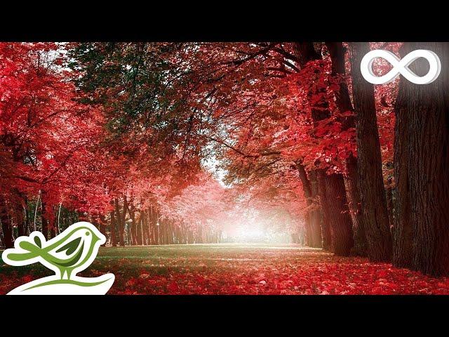 Beautiful Relaxing Music Romantic Piano Music, Violin Music, Cello Music, Guitar Music в74