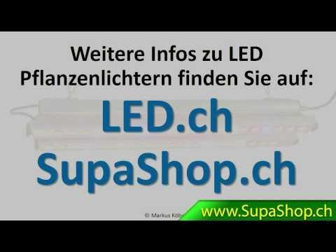 Wie Finde Ich Meine Passende LED Wachstumslampe Für Meine Pflanzen? ( Www.led.ch )