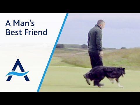 A man's best friend at Royal Aberdeen Championship Golf Course