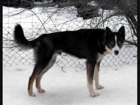 Las Razas de Perros (Parte II)