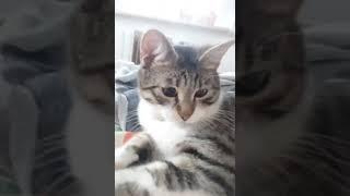#Самый милый кот