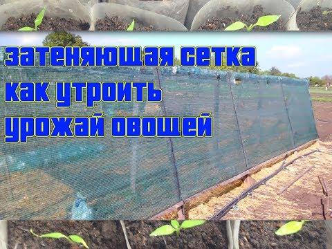 Выращивание томатов, огурцоф, перца, баклажан / Как утроить урожай овощей / Солнцезащитная сетка