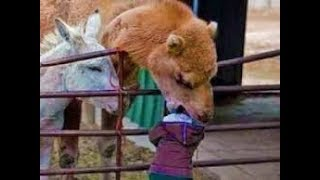 Funniest Animals Scaring People Reactions Weekly LOL😂🙃 of 2019Funny Animal Videos👌