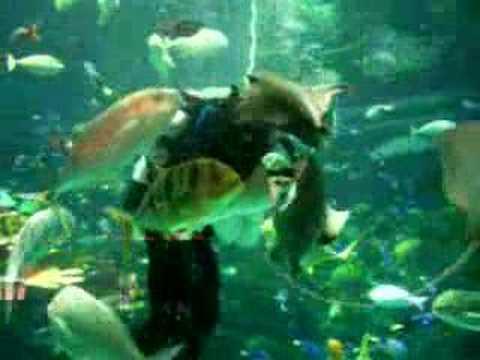 Manta Ray's and Sharks swim in giant aquarium in Las Vegas