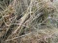 Mould Spores In Hay mp3