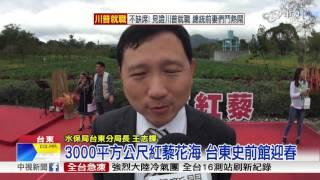 3000平方公尺紅藜花海 台東史前館迎春│中視新聞 20170121