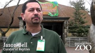 Amphibian Conservation at Philadelphia Zoo