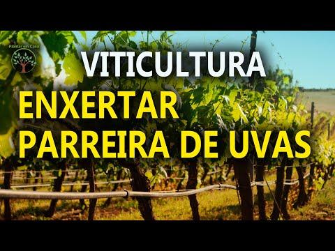 Enxertia de mudas, como fazer, uvas, pêssego, jabuticaba e outras plantas, qualidade de vida