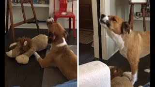 Prepare To Fall In Love With Chris Evans' Dog Dodger And His Terrible Singing