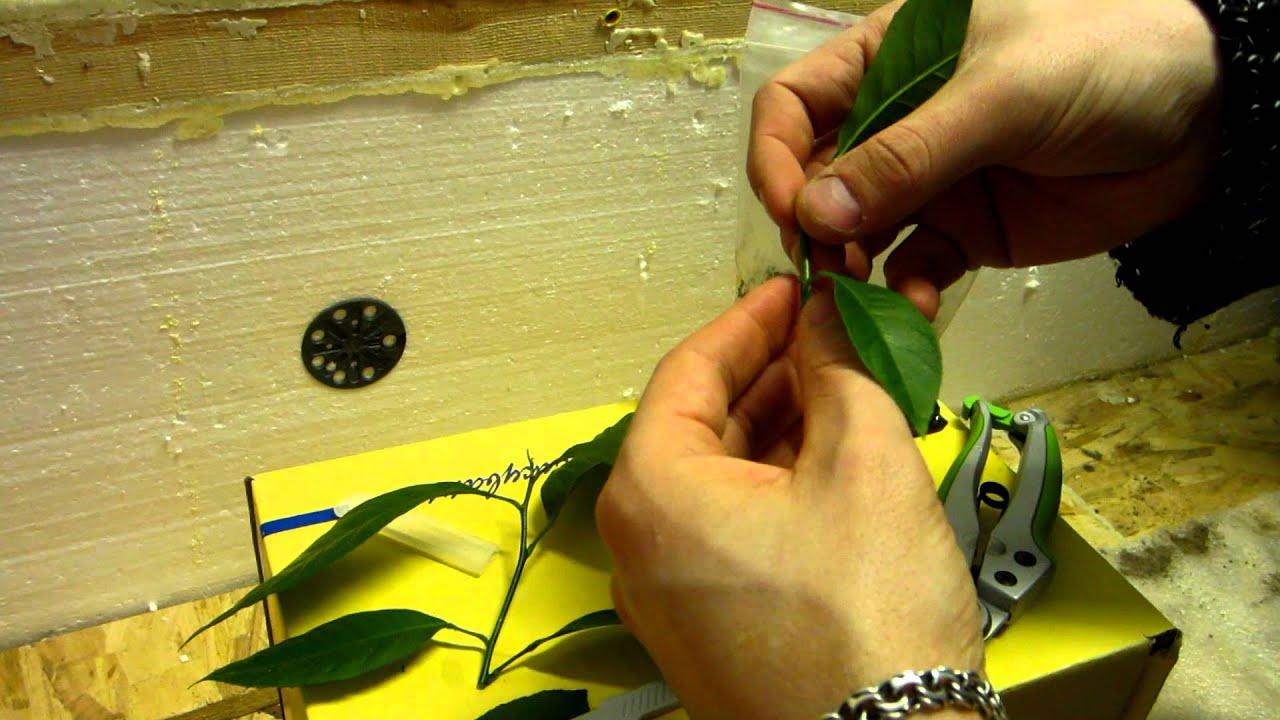 Вязание крючком бабушкин квадрат пончо 284