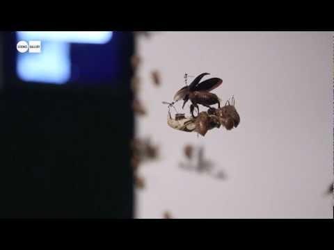 Cicada - Oscillator