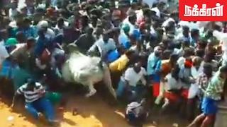 Bulls swept off into the crowd ..! Nerkuppai Jallikattu Best Moment