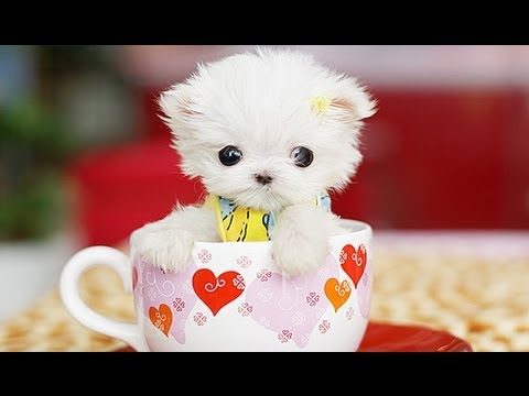 Cutest Pet Video Ever!!!