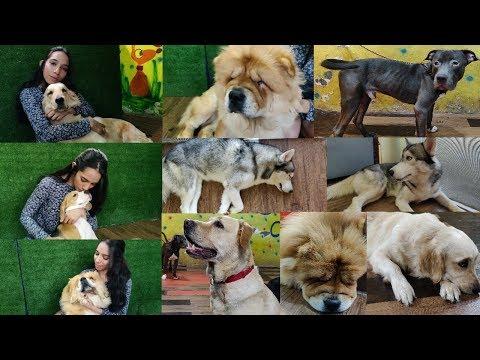 Pawfect Life Dog Cafe