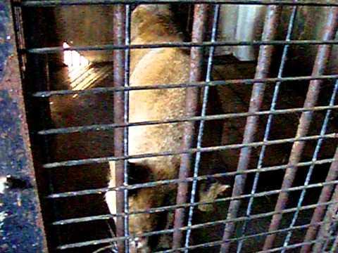 おびひろ動物園 ライオン舎
